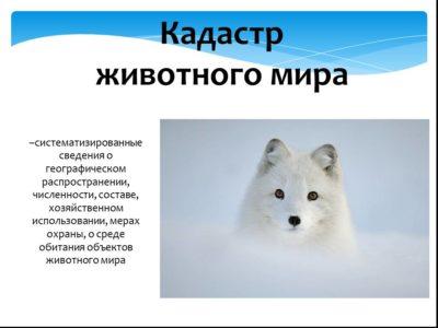 Государственный кадастр животного мира